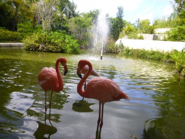 paradisus-palma-real-flamingos