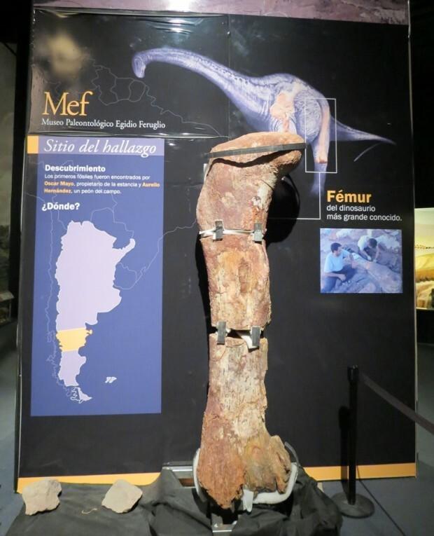 trelew-mef-femur-dinossauro