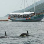 Orcas em Arraial do Cabo