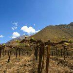 valle-elqui-turismo-chile-118