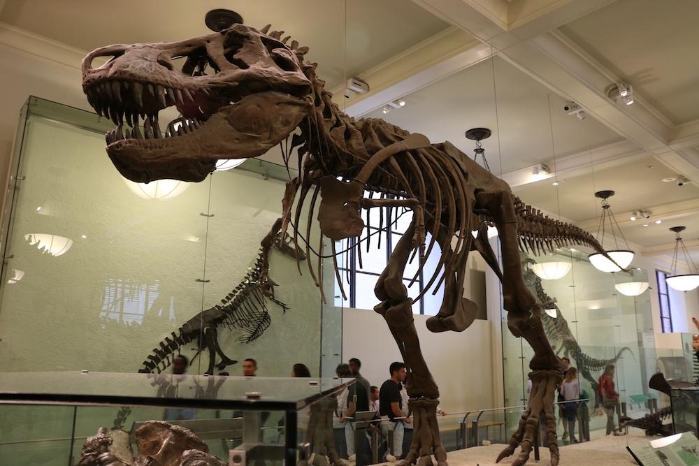 museu-nyc-natural-history