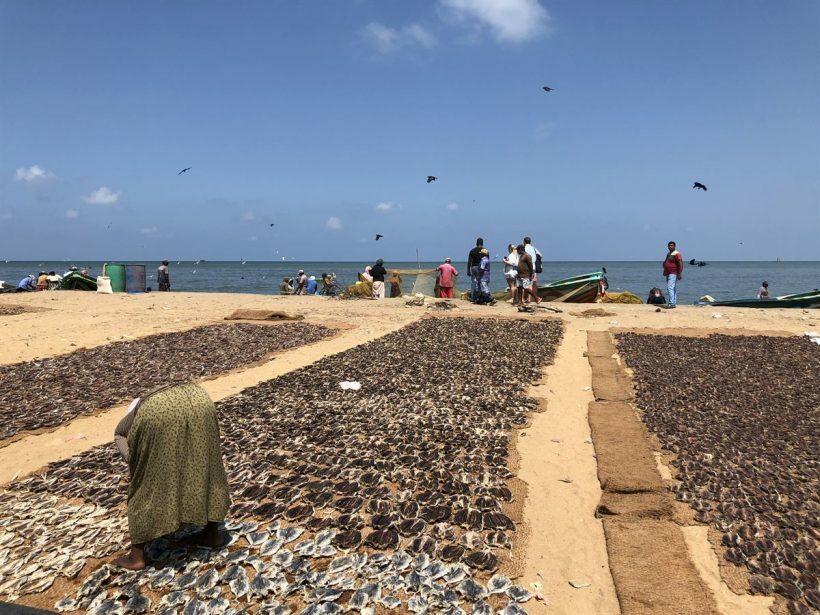 Mercado de Peixes Negombo