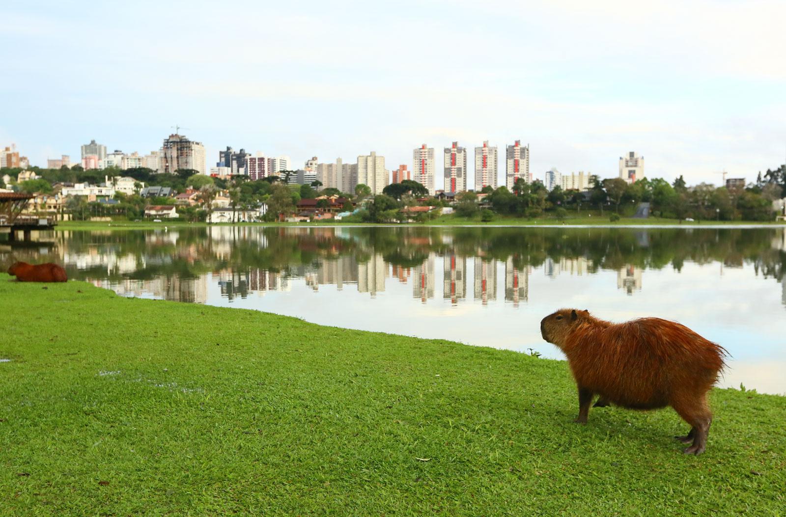 O que fazer e turismo em Curitiba