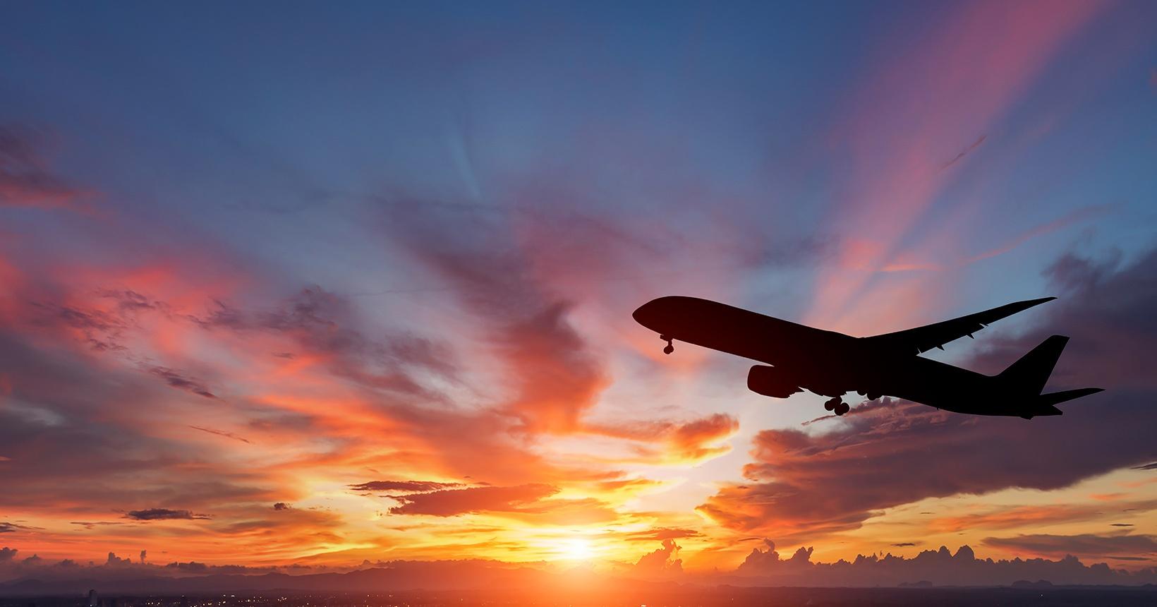 Dicas e regras para o transporte de animais de estimação em voos