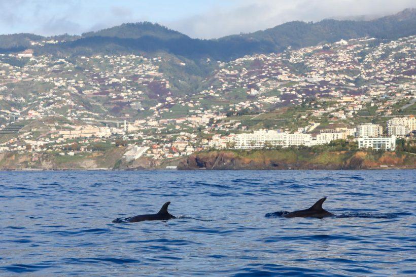 Passeio para observação de cetáceos