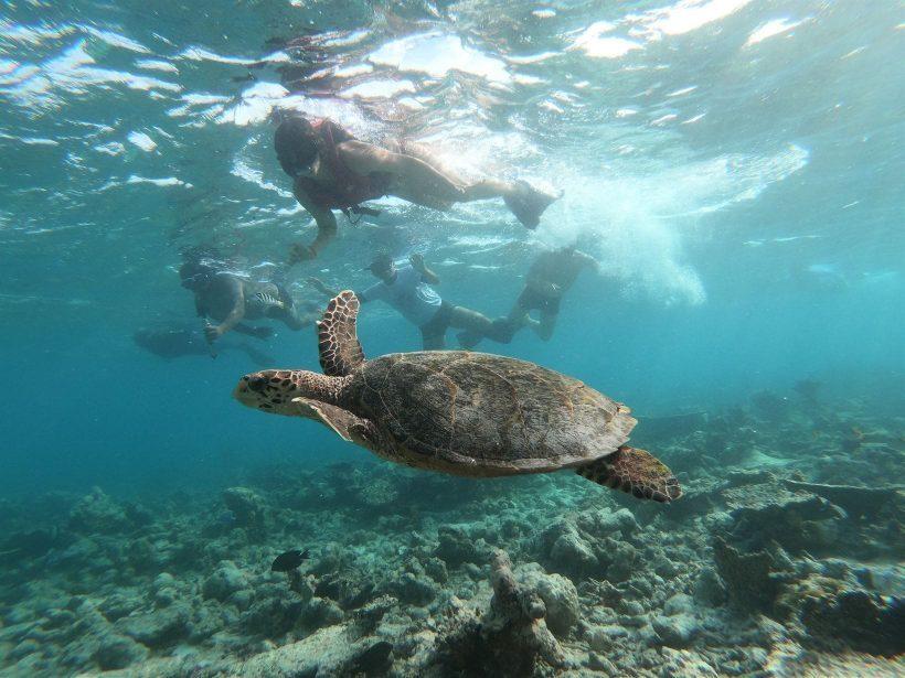 passeio tartarugas maldivas