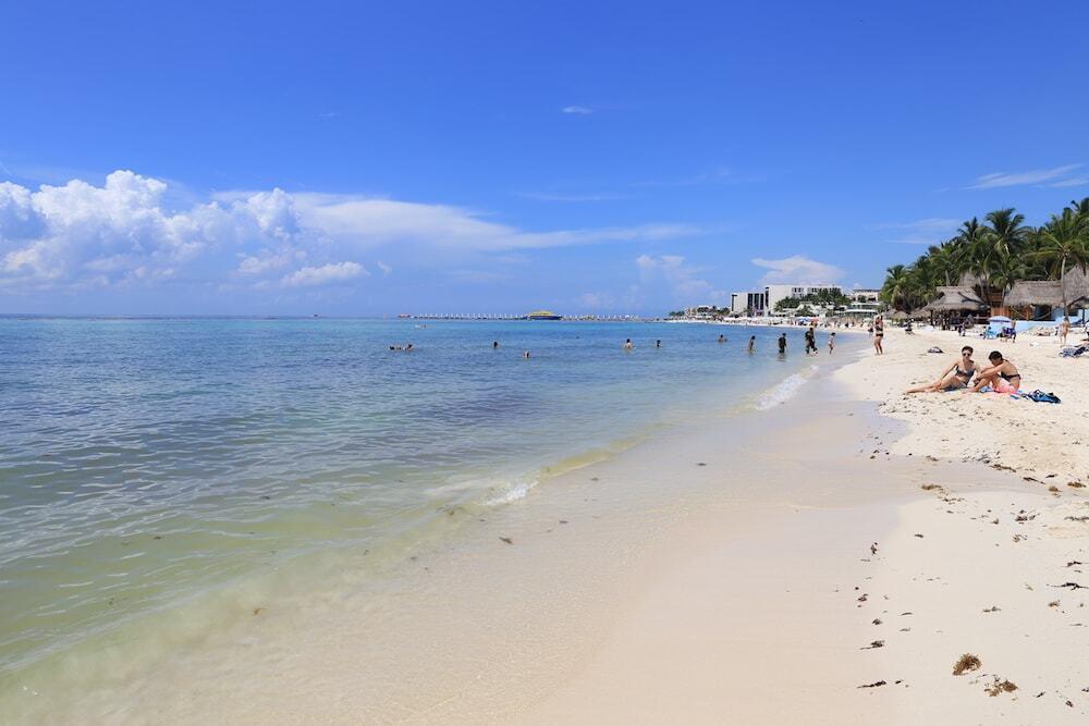 playa del carmen algas