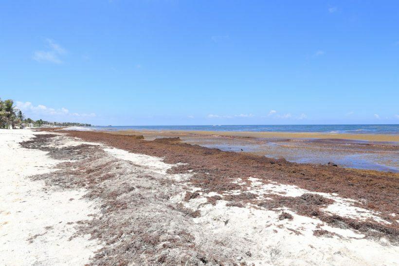 tulum algas praia