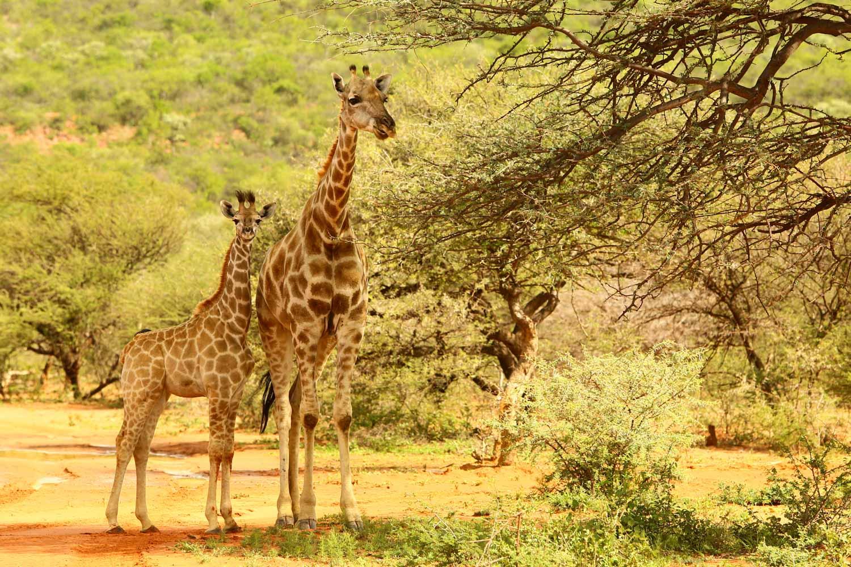 viagem em julho africa