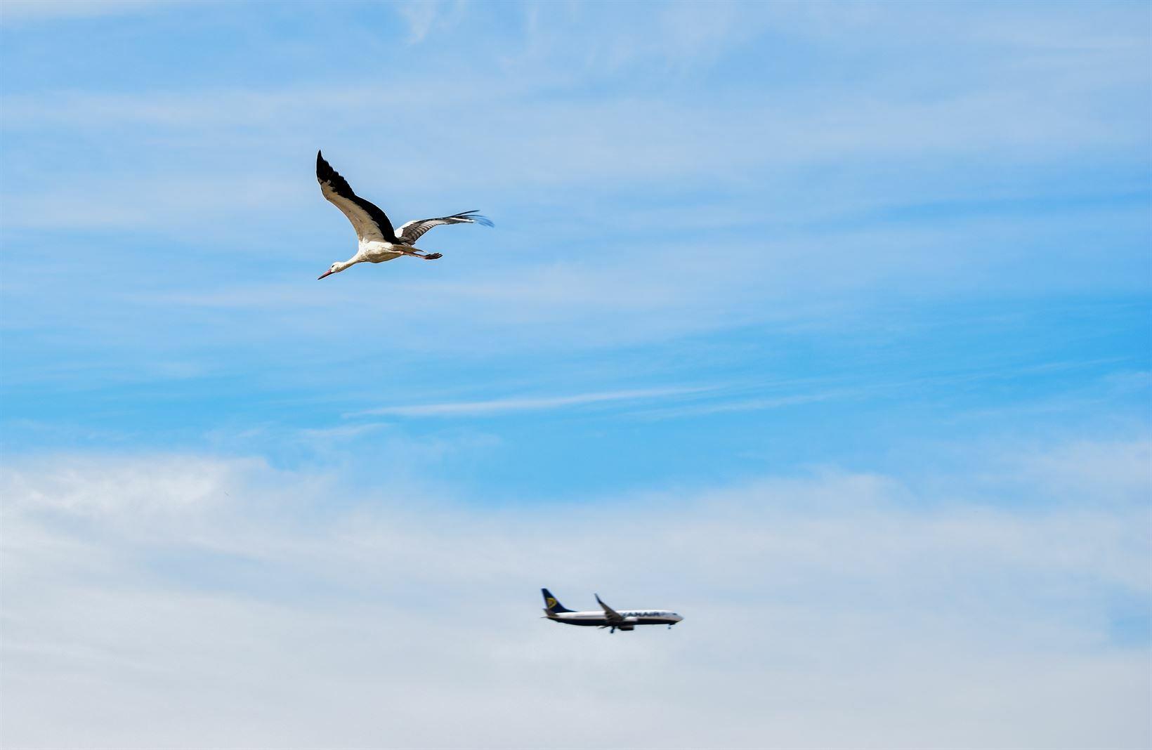 Pássaro e avião: Pouso de emergência