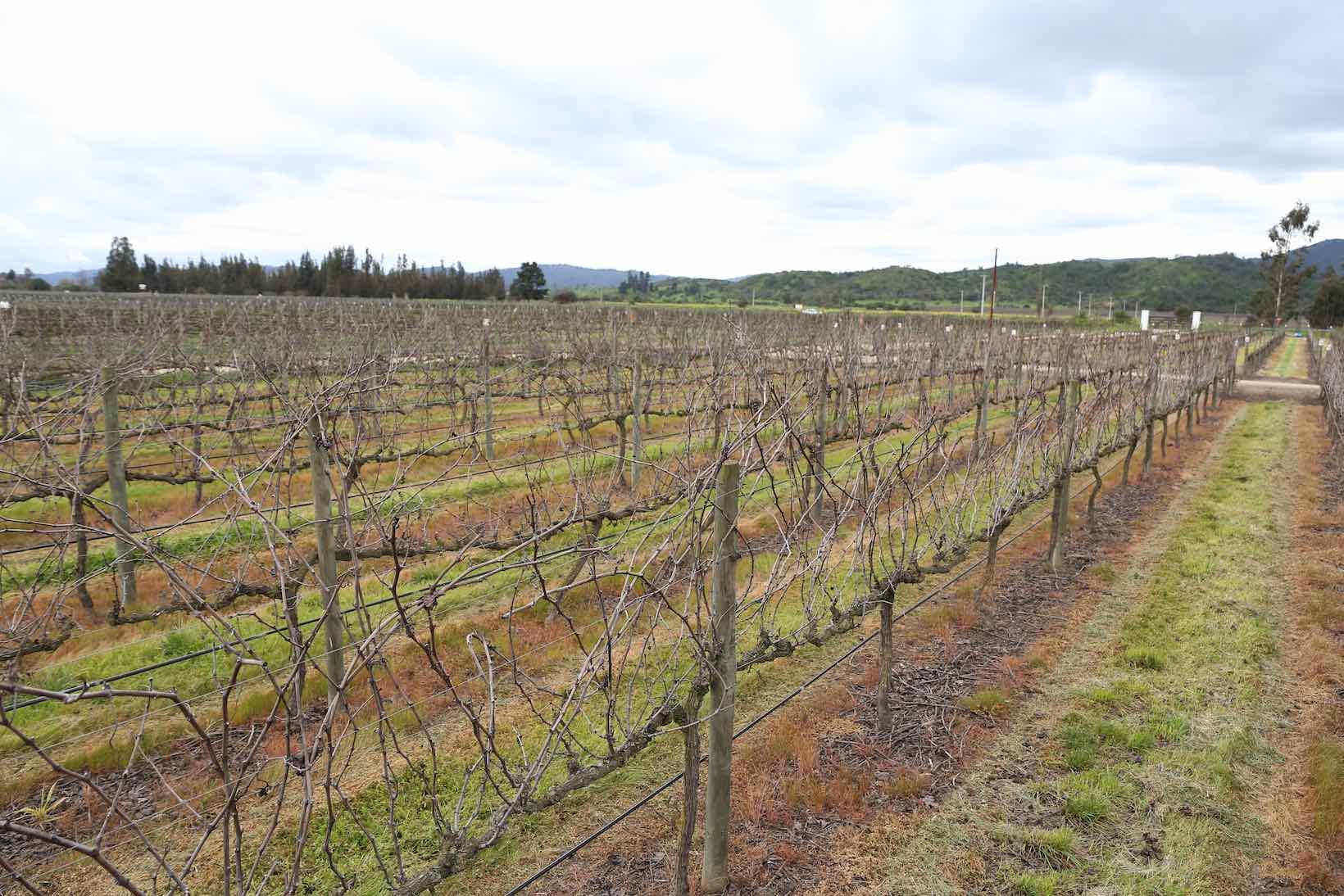 santiago vinicolas